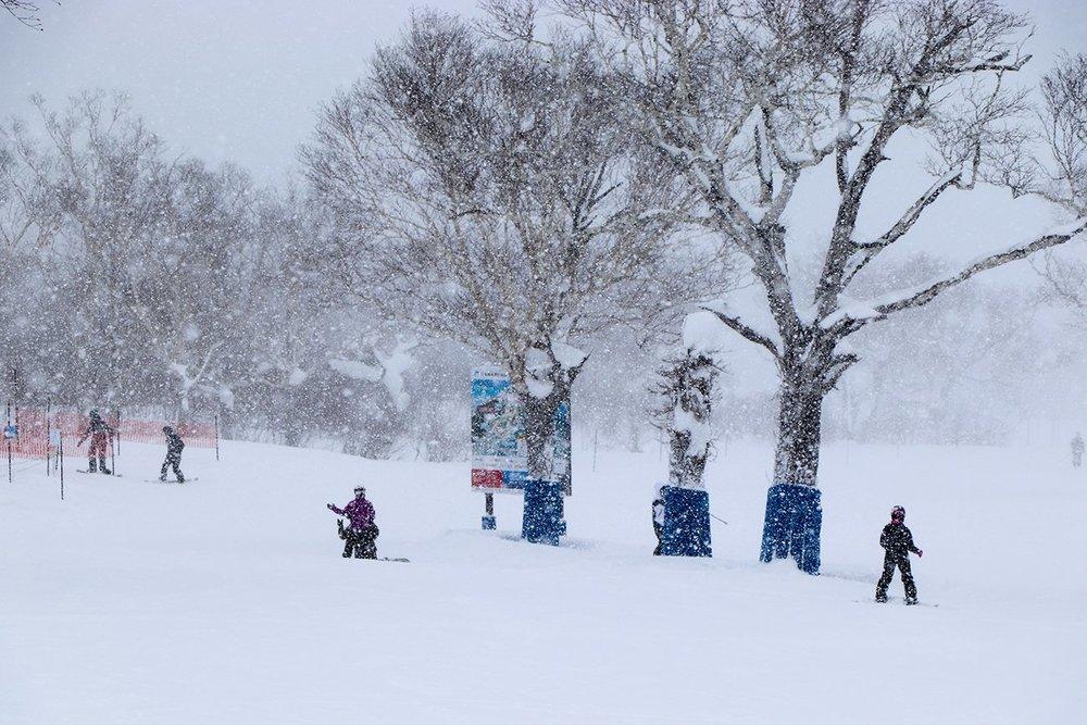 雪の中でスキーを楽しむ人びと